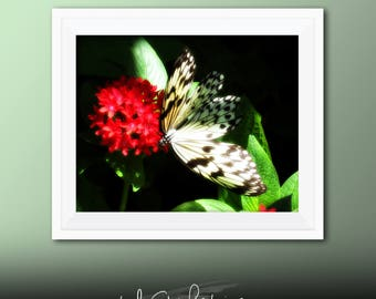 Printable Wall Art Butterfly Print #B02, Butterfly Decor, Butterfly Photo Closeup, Printable Butterfly Art, Printable Photo Art