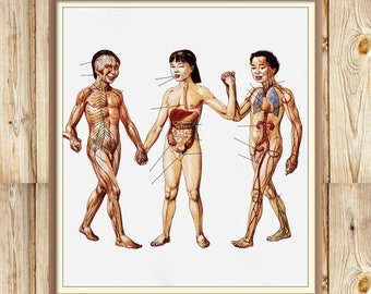 Human Anatomy Vintage Print - 1997 Russian Encyclopedia - Printable Art - Instant Download