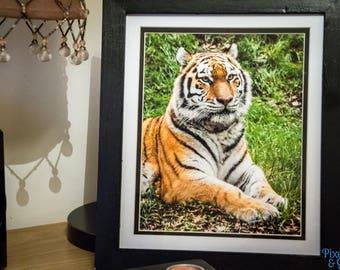 Tiger, original framed image