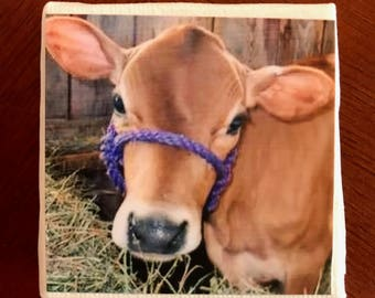 Vermont Jersey Cow 2x2 magnet