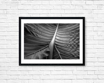 Elephant Ear Photo Print