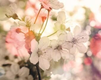 Floral Decor, Apple Blossom Flower Photography, Nursery Decor, White Flowers, Natural Floral Decor, Girl Nursery Art, Floral Art Print