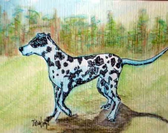 SPECIAL Spotted Dog art, Dalmatian watercolor, Pointer drawing, collectible Texas artist