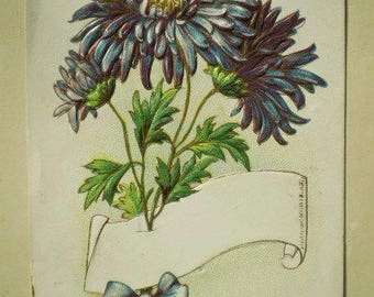 South Bend, Indiana - Early 1900s - Antique American Postcard - Purple Chrysanthemums