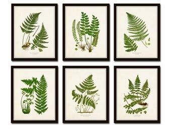 Vintage Ferns Print Set No. 26, Giclee, Botanical Art, Botanical Print Set, Vintage Fern Prints, Illustration, Vintage Botanicals, Art Print
