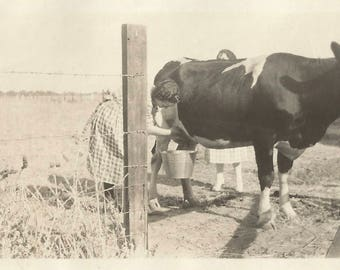 "Vintage Snapshot ""Milking Time"" Dairy Cattle Milking Pail Barbed Wire Fence Farming Ranching Rural America Found Vernacular Photo"