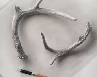 Deer Antler Yin & Yang Graphite Drawing Print