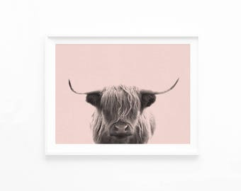 Highland Cow Printable Download, Highland Cow Photography, Southwestern Decor, Nursery Wall Art print, Pastel Pink Highland Cow Photo, hc1p