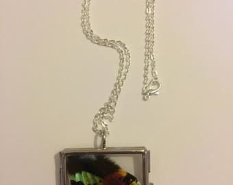 Real Insect Wing Necklace. Madagascan sunset moth. Double Sided Glass Locket.