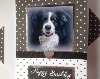 COLLIE SHEEPDOG birthday Greetings dog Card handmade Border collie Happy Birthday dog Thank you card A6/C6 size