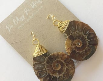 Ammonite fossil spiral nature sea shell hook earrings