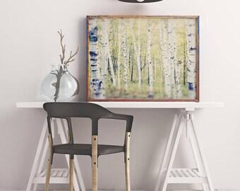 Tree Photography, Birch Tree Art, Landscape Photography, Tree Photo, Woodland Art, Tree Photograph, Tree Print