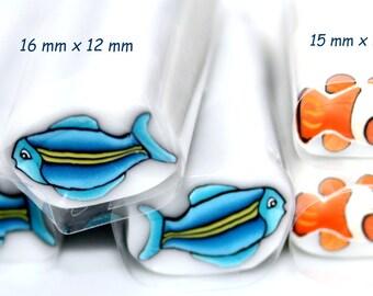 Tropical fish : clown fish