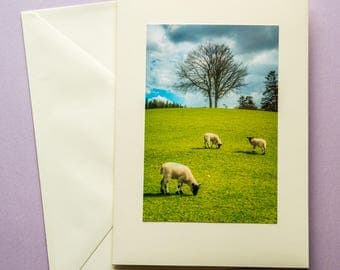 Three lambs - all occasion greeting card