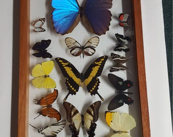 Wood framed butterflies