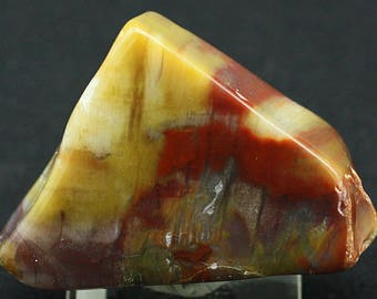 Petrified Wood, Arizona - Mineral Specimen for Sale