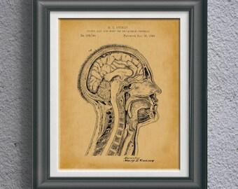 Medical Teaching Patent Biology Classroom Artwork Cross Section of Human Head Anatomy Artwork Anatomical Decor Science Class Wall Art PP9067
