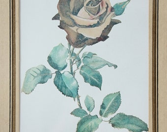 Vintage Rose Painting Prints in Wooden Frame, Botanical Print by Kate Gerber, Josephine Bruce Rose