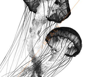Jellyfish Drawing Print – Black and White