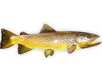 Brown Trout, Brown Trout Fishing, Brown Trout Decal, Brown Trout Sticker