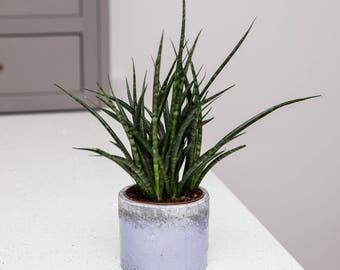 Planter no 144 (Blue & Grey)
