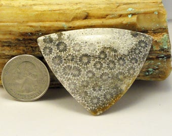 Fossilized Coral Free Form Cabochon