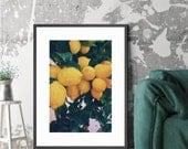Lemons Art Print • Kubitees, Kubitees Art, Art Print, Home Decor, Bedroom Decor, Nature, Nature Prints, Digital Download, Lemons, Yellow Art
