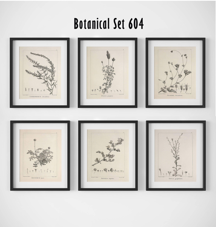 botanical print set of 6 botanical wall art floral print set vintage botanical prints antique floral art botanical