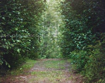 Digital Background Path Through Trees