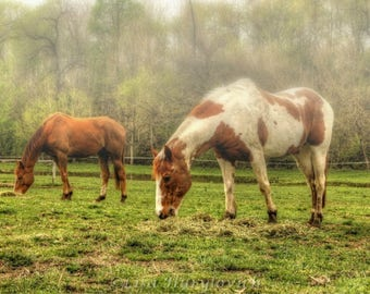 Grazing, horses, equine, fog, summer, brown, white, photograph, photo,