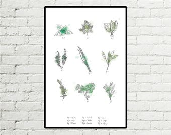 Herbs - displays 12 X 18 Illustration with watercolors