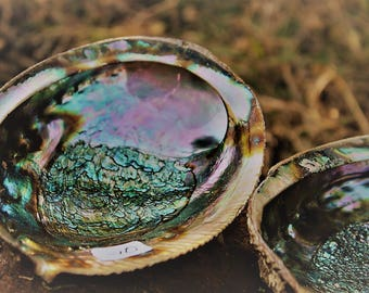 5in Abalone shells