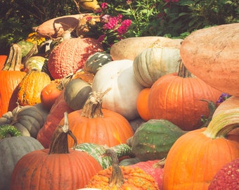 Wall O' Pumpkins