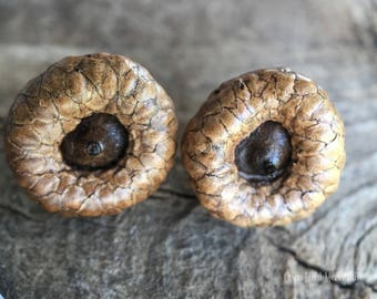 Natural Acorn Earrings
