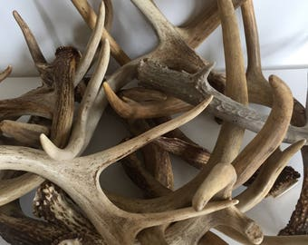 2 Lbs of Deer Antlers Premium Natural Buck Horns