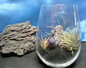 Terrarium with Moon and Seiryu Stone in Wine Glass, after dark scene with living air plants