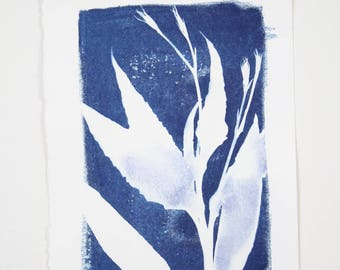 Solar Eclipse / Handmade Art Print / Small Original Botanical Floral Cyanotype Photogram Art / Blue / Indigo Print
