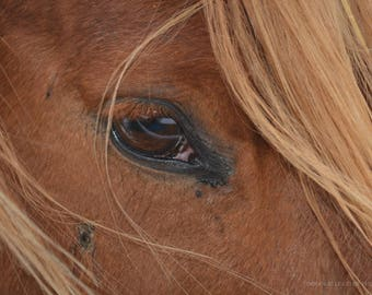 Expression horse / horse expression intense look. Deepness