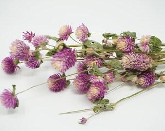 Purple globe  amaranth flowers, purple gomphrena, globe amaranth, gomphrena, purple wedding, purple florals, purple flowers