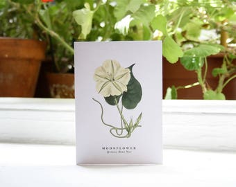 Moonflower: Botanical Print - Blank Greeting Card