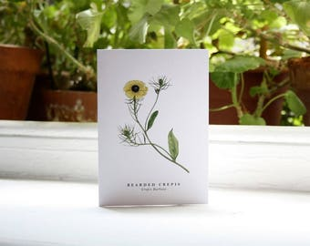 Bearded Crepis: Greeting Card