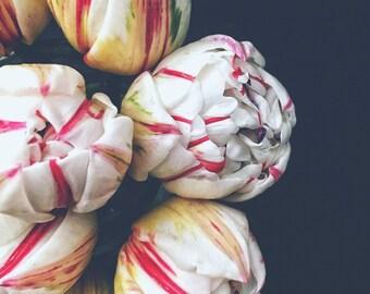 Wall Art, Floral Print, Tulips, Tulip Print, Floral, Flower, BonneRoutePhotos, Flower Print,