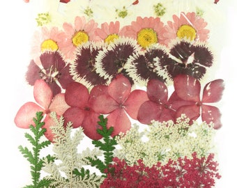 Pressed flowers mixed pack, daffodils delphinium daisy Chinese pink hydrangea, lace flowers, chrysanthemum, foliage