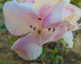 Macro Pink Flower Photo