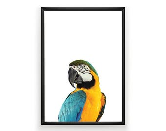 Macaw Print, Nursery Wall Art, Woodland Nursery Decor, Bird Wall Art, Macaw Print Wall Art, Animal Nursery Print, Woodland Wall Art, Bird