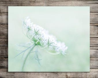 Queen Anne's Lace Print, Flower Photography, Farmhouse Style, Printable Wall Art, Digital Download