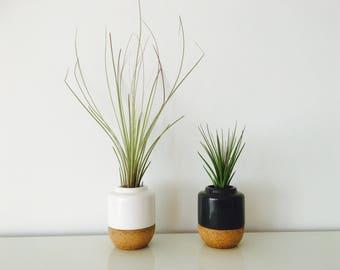 Air plant - terrarium - vase - tillandsia