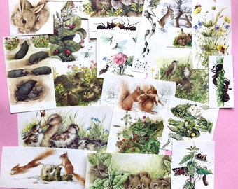 Animal ephemera pack - weheartconfetti
