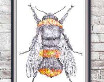 Bumble Bee Illustration Print - Save The Bees, Wildlife, Nature, Art Poster