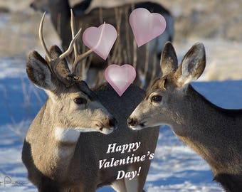 Valentine Card Note Greeting Holiday Bighorn Sheep Ram Ewe Wildlife Photo Nature Cheerful Fun Original Photography 5x7 Inch Heavy Weight